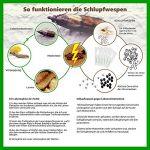 Schlupfwespen gegen Lebensmittelmotten 8 Karten x 3 Lieferungen